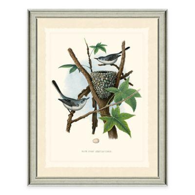 Gnatcatchers Framed Art Print