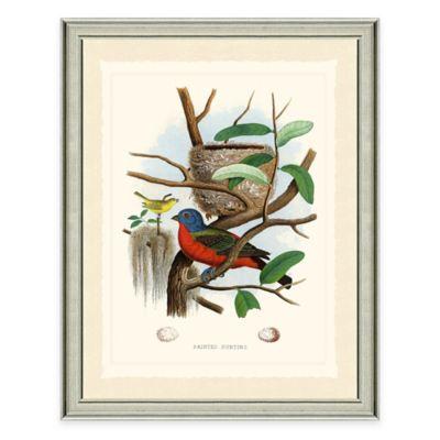Buntings Framed Art Print