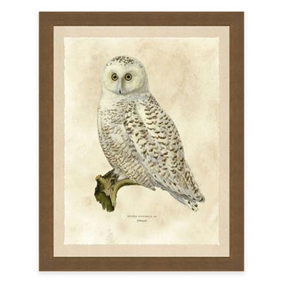 White Owl Framed Art Print