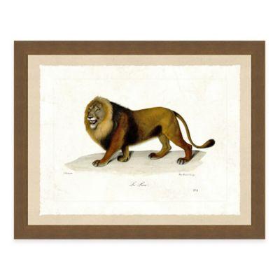 Lion Framed Art Print