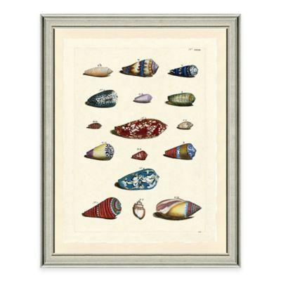 Framed Giclée Color Burst Shell Group I Wall Art