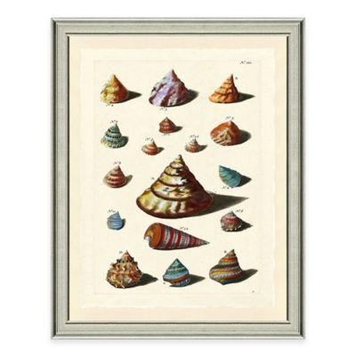Framed Giclée Color Burst Shell Group IV Wall Art