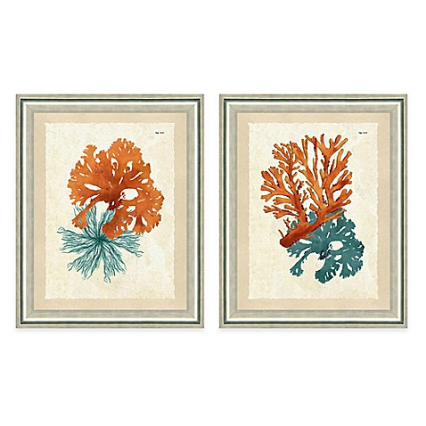 Framed Gicl 233 E Teal And Orange Seaweed Print Wall Art