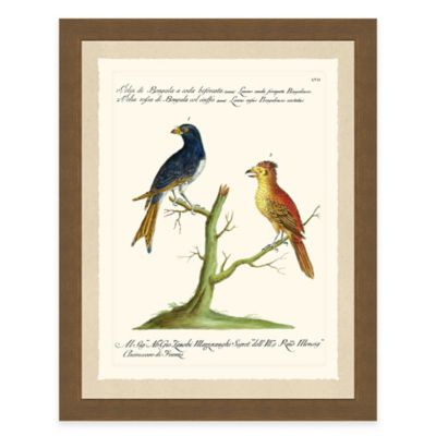 Colorful Birds I Framed Art Print