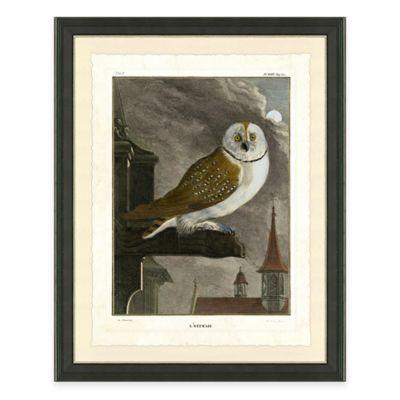 Owl I Framed Art Print