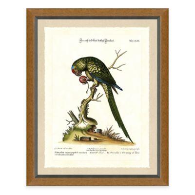 Bird Scene IV Framed Art Print
