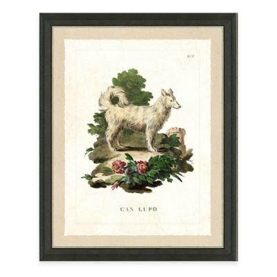 Dog Study II Framed Art Print