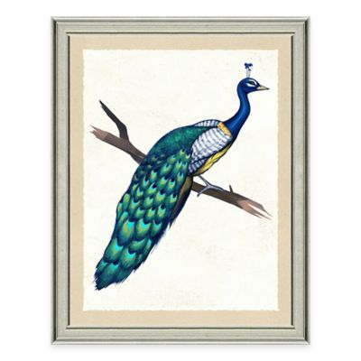 Peacock II Framed Art Print