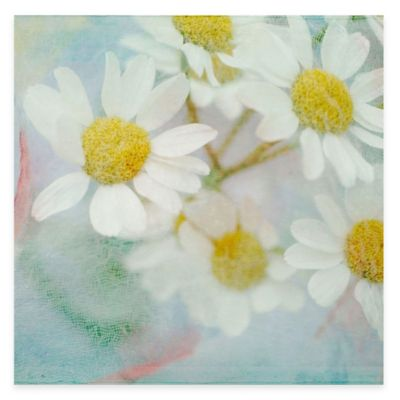 Parvez Taj White Daisy 40-Inch x 40-Inch Canvas Wall Art