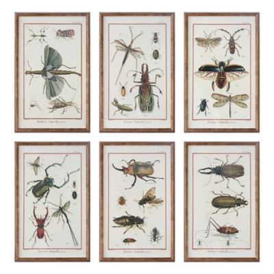 Uttermost Multi Insect Prints Wall Art (Set of 6)
