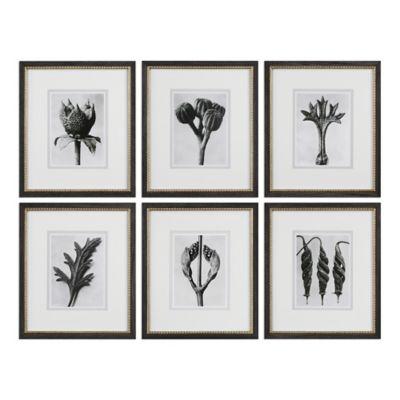 Uttermost Botany Specimen Prints Wall Art (Set of 6)