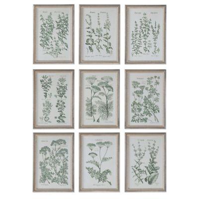 Uttermost Herb Garden Prints Wall Art (Set of 9)