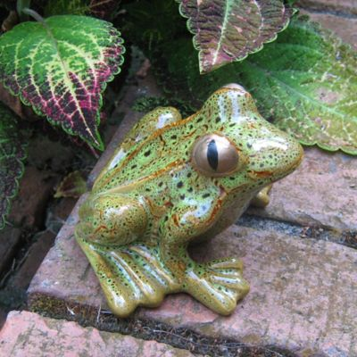 Bosmere Ceramic Garden Frog in Brown