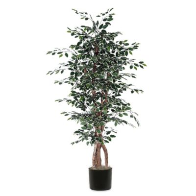 6-Foot Variegated Fabric Ficus Executive Tree with Black Pot