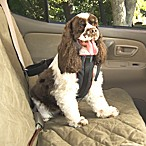 Pet Safety Vehicle Harness