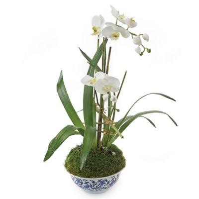 John-Richard 29-Inch Phalaenopsis Orchid Floral Arrangement