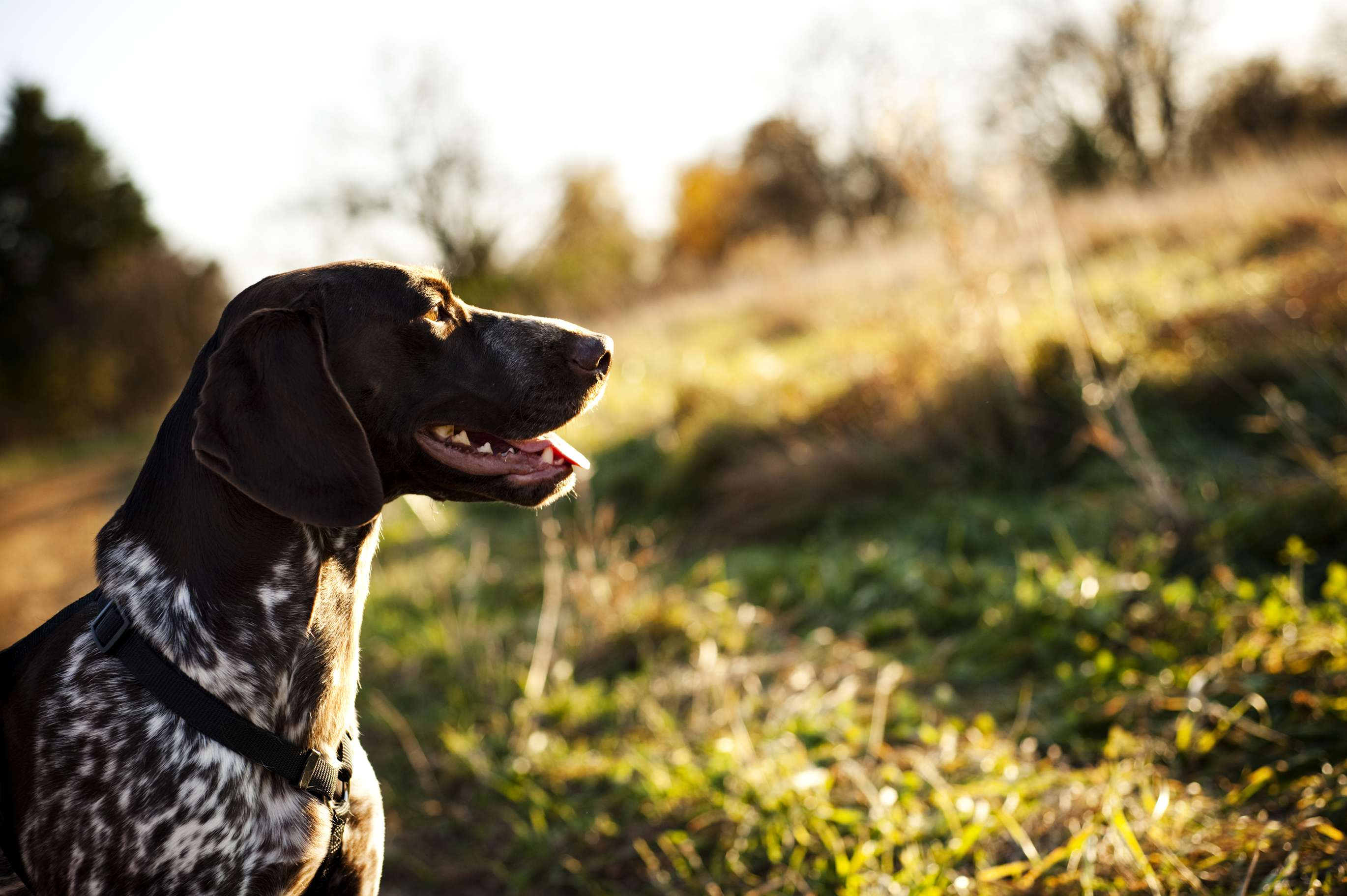 Hunting Dogs  Everything You Ever Wanted To Know