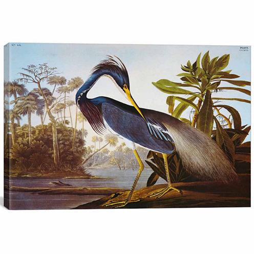 "Icanvas Louisiana Heron From ""Birds Of America"" Canvas Art"