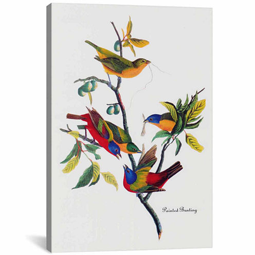 Icanvas Painted Bunting Canvas Art