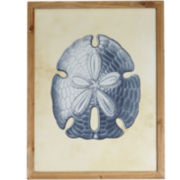 Sand Dollar Glass-Framed Wall Art