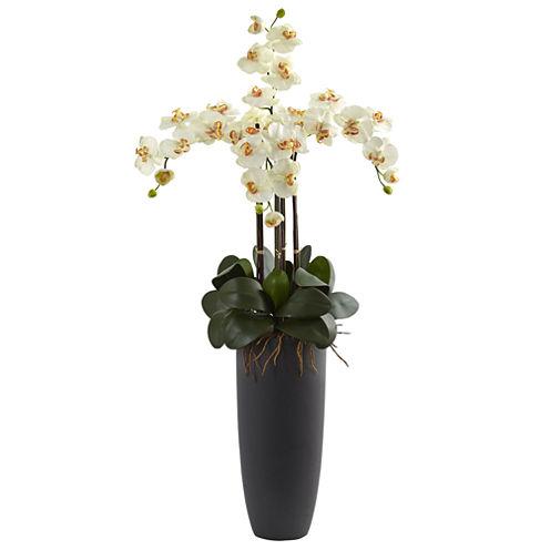 Phalaenopsis Orchid Floral Arrangement