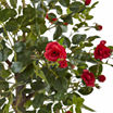 4.5' Rose Topiary