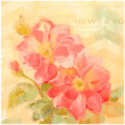 Weston Rose Canvas Wall Art