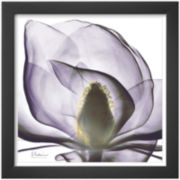 Precious Orchid in Purple Close Framed Print Wall Art