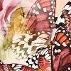 Butterfly UnitySwatch