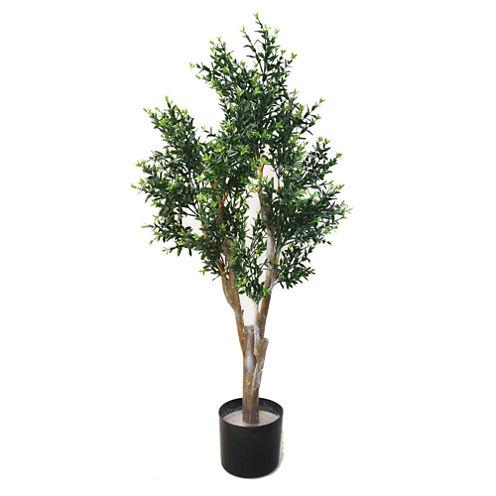 "41"" Potted Ixora Topiary Tree"