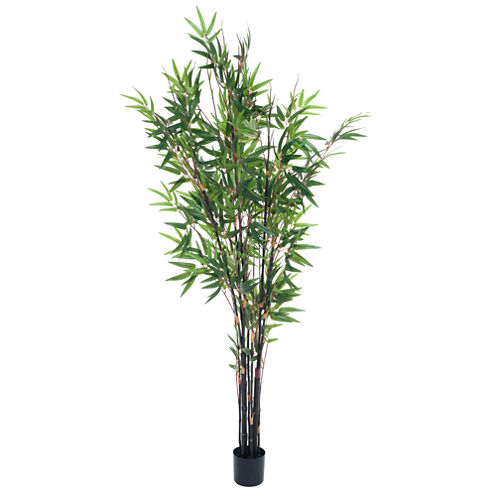 5' Potted Bamboo Tree