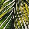 Green Paradise Pal