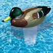 Poolmaster Clori-Duck Mallard Chlorine Dispenser