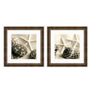 jcpenney.com | PTM Images™ Starfish & Urchins Canvas Wall Art Collection