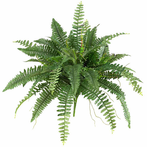 "2-pc. 40"" Boston Fern"