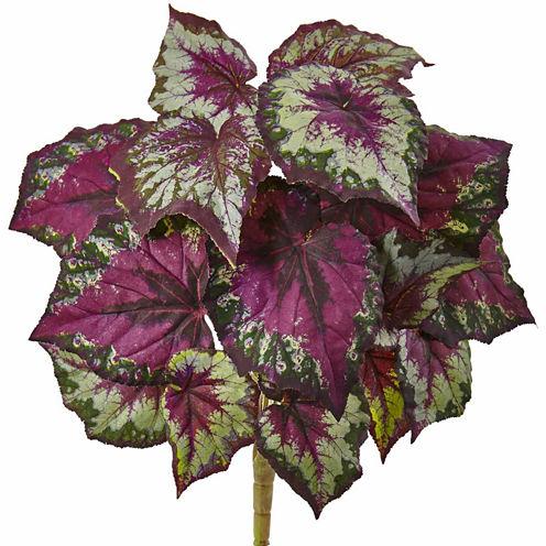 6-pc. Wax Begonia Bush