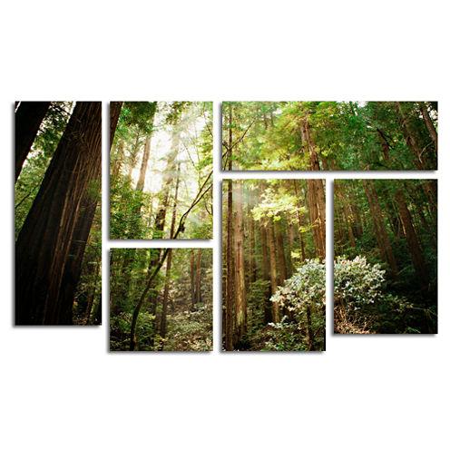 Muir Woods 6-Panel Canvas Wall Art Set