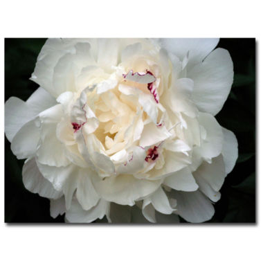 jcpenney.com | Perfect Peony Canvas Wall Art