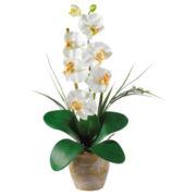 Phalaenopsis Silk Orchid