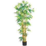 5' Bambusa Bamboo Silk Tree