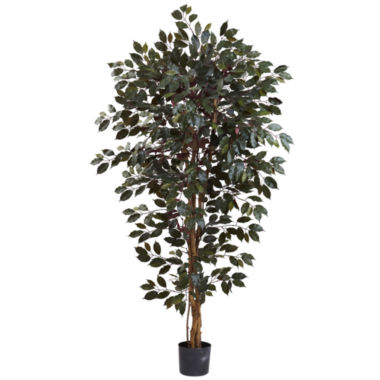 jcpenney.com | 6' Capensia Ficus Tree