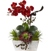 Seasonal Orchid & Succulent Garden With Planter