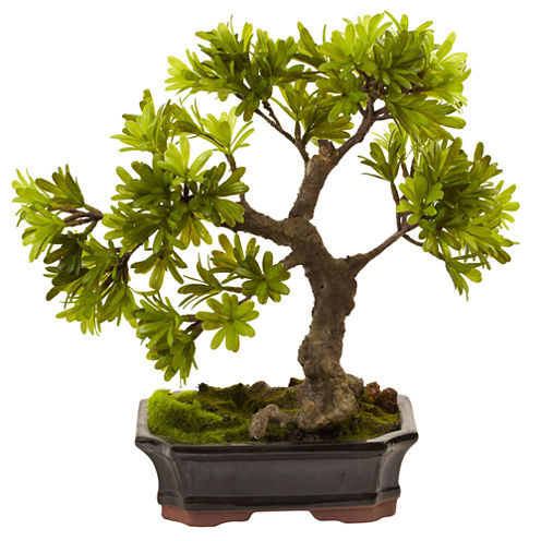 Nearly Natural Podocarpus With Mossed Bonsai Planter