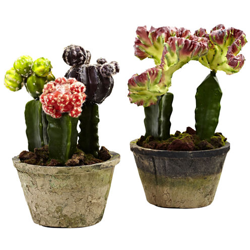 Colorful Cactus Gardens Set Of 2