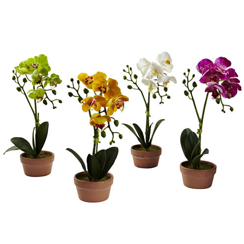 Phalaenopsis Orchid With Clay Vase Set Of 4