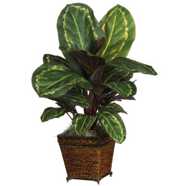 jcpenney.com | Nearly Natural Maranta Silk Plant with Basket