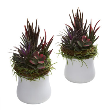 jcpenney.com | Nearly Natural Mixed Succulent With White Planter Set Of 2