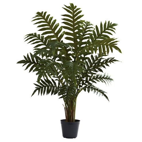 3.5' Evergreen Plant