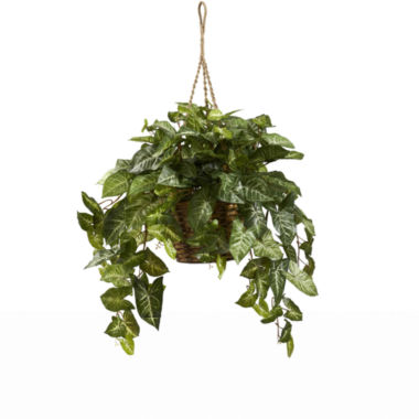 jcpenney.com | Nearly Natural Nepthytis Hanging Basket