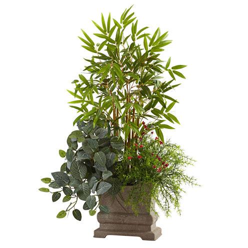 "38"" Mixed Mini Bamboo, Fittonia & Springeri With Planter"